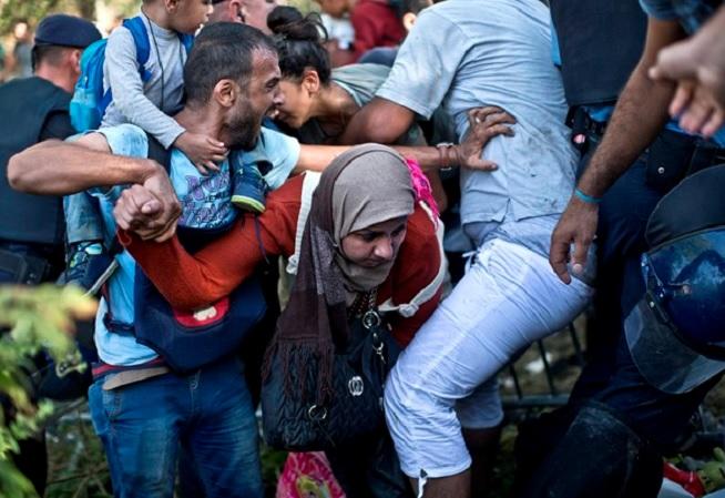 migrační zvěř v bitce